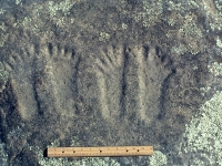 human_footprints12x8-1